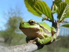 Weer stukje nieuwe natuur voor boomkikker