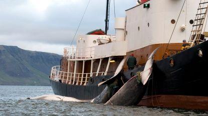 Noorwegen verhoogt quota om walvisvangst te stimuleren