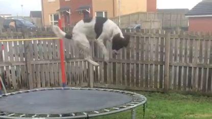 Vergeet corona even met deze dólgelukkige hond