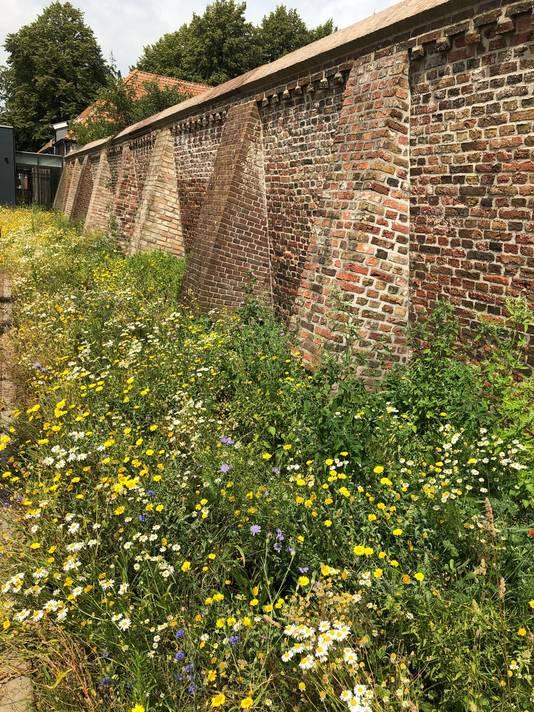 Zowel binnen als buiten de muren van het klooster is de kleurenpracht dit jaargetijde enorm uitbundig.