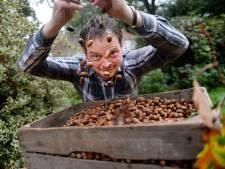 Weerseloër wil 800 kilo eikels verzamelen voor behoud van wilde zwijnen