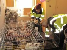 27 dieren uit zwaar vervuild huis in Rotterdam gehaald