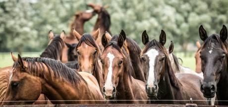 Paardenbedrijf Horssen mag intact blijven