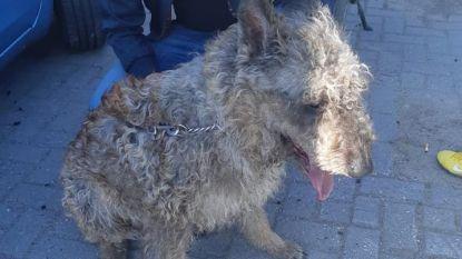 Oververhitte hond bevrijd uit hete auto in Utrecht