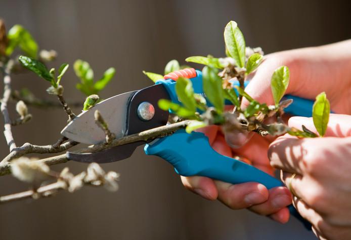 Het is tijd om te tuinieren!