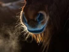 Stank- en stofoverlast, ongedierte en af en aan rijdende auto's: buurt loopt te hoop tegen paardenwei