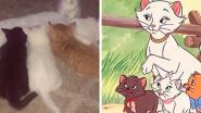 'Aristocats' in't echt: zwerfkat Duchess wereldberoemd dankzij kittens, die sprekend lijken op de Disneyfilm