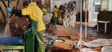 Teteringse bomenwasserij vreest gevolgen coronavirus