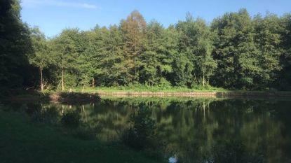 Laag waterpeil op visvijver Hortensiadreef: gemeente overweegt om vissen te verplaatsen