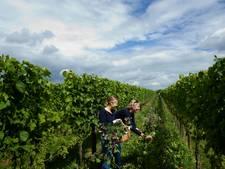 Weelderig wildboeket uit de wijngaard