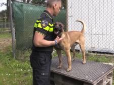 Van schattige pup tot stoere politiehond bij de brigade in Den Haag