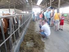 Oog in oog met de roodbonte koe op de Boerenerfdag Hank