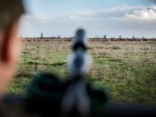Raad van State: afschot van edelherten in Oostvaardersplassen mag