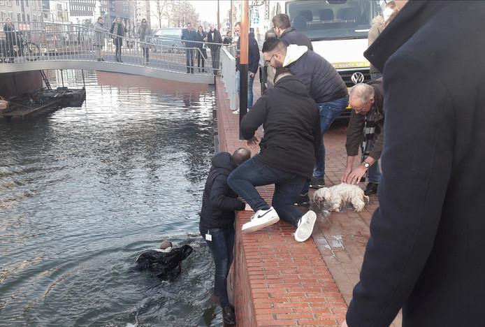Hondje Desi maakt kennis met de onomheinde kade van de Waterboulevard in Almelo: de glijdt uit en valt in het water.