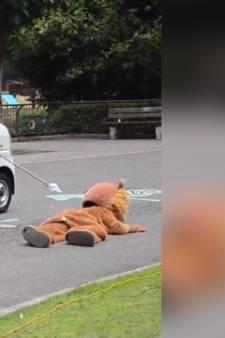 Un zoo teste sa sécurité avec un homme en costume de lion