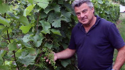"""Ten Kapittelberg is al sinds 1964 een stukje Frankrijk in de Kempen: """"Wijn maken is kinderspel. Toch als je gezonde druiven hebt"""""""