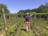 Wijnoogst naar de knoppen door vorst in mei