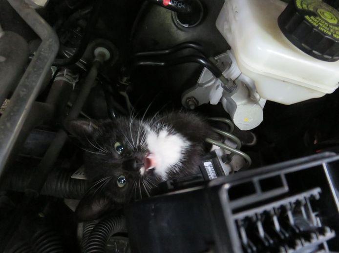 Een van de katjes beet flink van zich af.