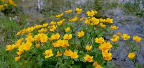 De fleurige lente in Twente wordt u aangeboden via social media...