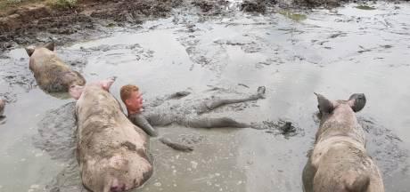 Jeroen snapt nu waarom varkens graag in de modder liggen: 'Het is echt lekker koel'