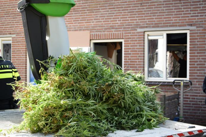 Volgens de politie stonden er ongeveer 400 plantjes in de woning aan de Schaapsdam, waarvan ook veel stekjes waren.