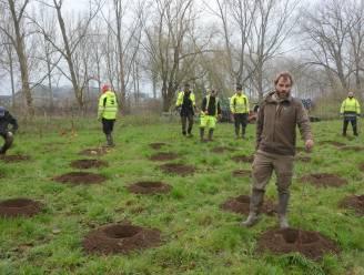 1,3 hectare nieuw bos in natuurreservaat De Lisdodde