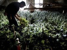 Drugscriminelen richten zich op Brabantse boeren: 'Onderschat die jongens niet'
