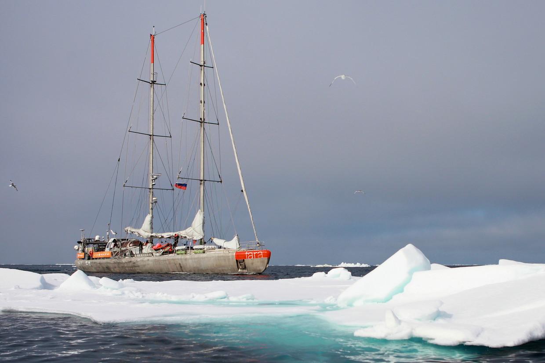 De Tara in arctisch water.