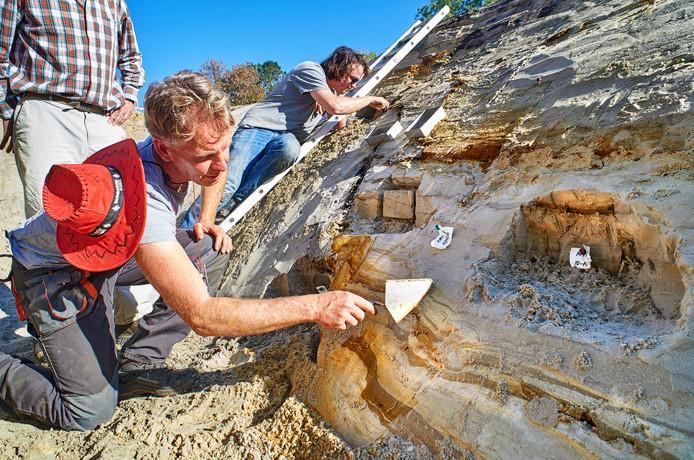 Onderzoeker Rimbaud Lapperre onderzoekt de Peelrandbreuk. Hier zie je de ijzerhoudende lagen in de bodem.
