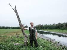 Wadlopen in de Rijnstrangen: uniek gebied slechts eens in de vier jaar toegankelijk