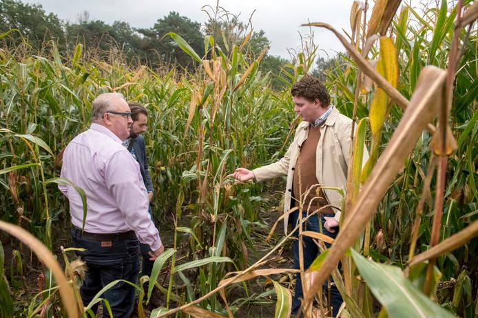 Aalt van Kempen (links) laat aan de Statenleden Paul Hofman-Fransen (Groen Links) en Antoon Kanis (D66) zien wat de schade is aan de mais, veroorzaakt door edelheren en reeën.