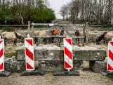 Betonblokken bij Oostvaardersplassen blijven voor de zekerheid liggen