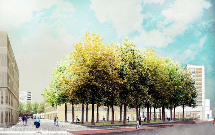 Bomenplein aan de Piusstraat.