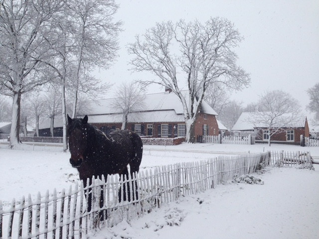 Mooi winters plaatje genomen in het Groot Loo in Hilvarenbeek.
