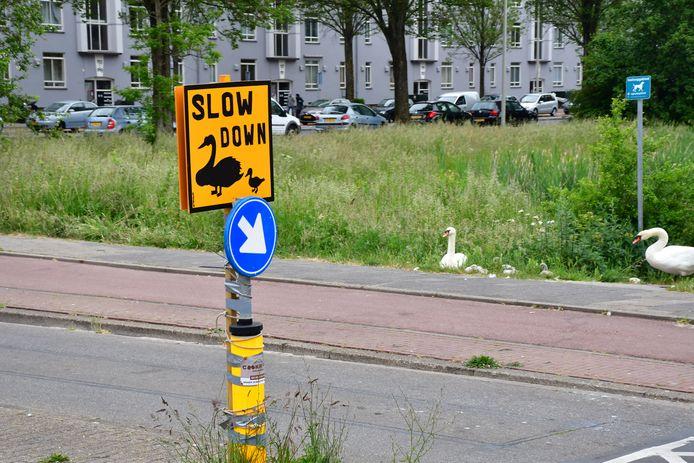 Met een verkeersbord hopen de omwonenden de zwanenfamilie te beschermen