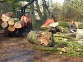 Amersfoort mag 1500 bomen voor aanleg westelijke rondweg voorlopig niet kappen