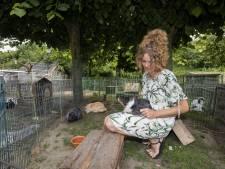 Gezocht: onderkomen met plaats voor 53 konijnen uit De Lutte
