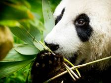 Hitserie 'Het echte leven in de dierentuin' in Ouwehands bij laatste 25 kanshebbers Televizier-Ring