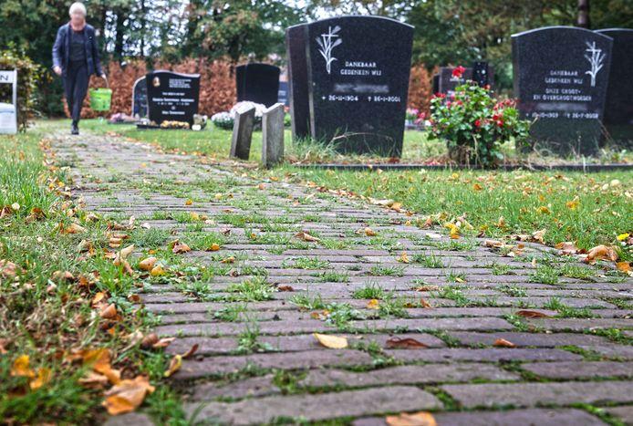 Begraafplaats 't Loo in Nistelrode: veel onkruid en in de achtergrond dode coniferen.