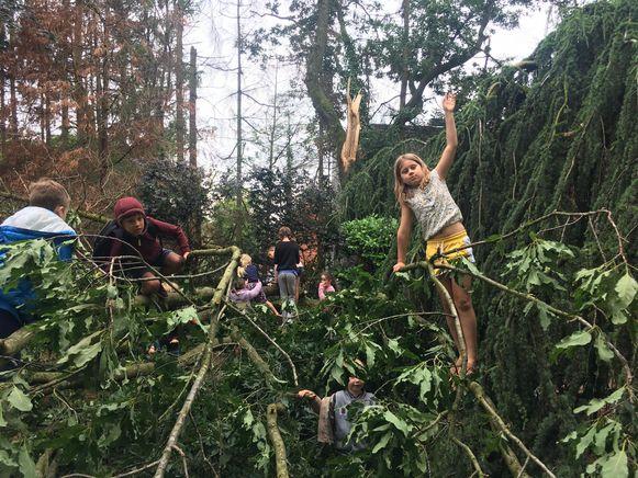 Storm kan ook plezant zijn... Pret in stormschade bij Freinetschool Wondere Wereld in Lummen. Kinderen willen graag dat de bomen nog even blijven liggen...