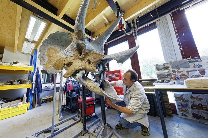 Jonathan Wallaard van het Oertijdmuseum in Boxtel bij de kop van de triceratops