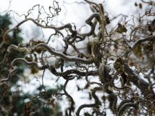 Romke van de Kaa mijmert over de kunst van de kronkelende struik