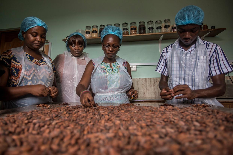 Vrouwen verwijderen schillen van cacaobonen bij Moments Chocolate, een van de vijftig kleine chocoladeproducenten in Ghana. Beeld AFP