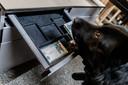 Politiehond Riff vindt binnen no time het geld. Een kijkje bij politiehondentrainers Koen Schellekens en Claudia Boomaars. Daar was deze week een delegatie uit Iran op bezoek die aldaar de honden gaan inzetten.