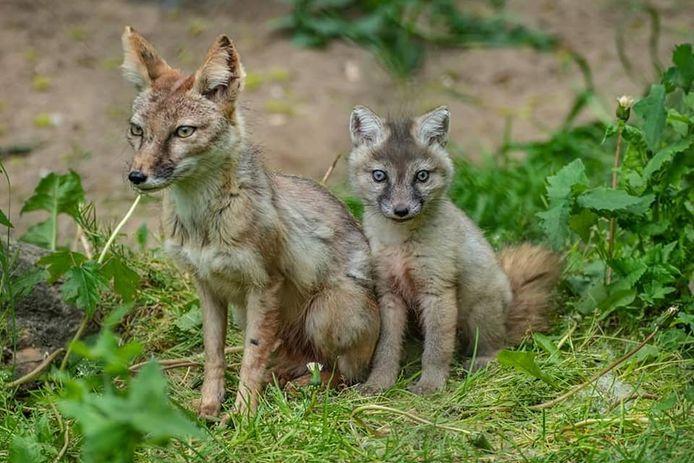 Er zijn allemaal dieren geboren bij Faunapark Flakkee.