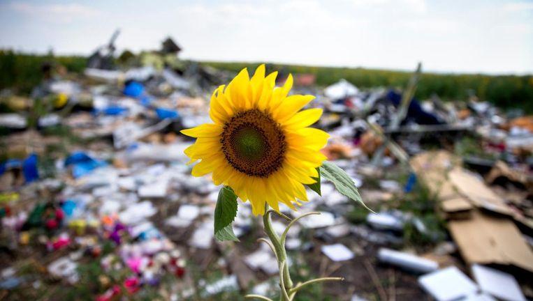 Een zonnebloem steekt boven de wrakstukken en puin uit in het rampgebied van de MH17 Beeld ANP
