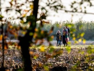 Bibliotheek zoekt gedichten om bos op te smukken