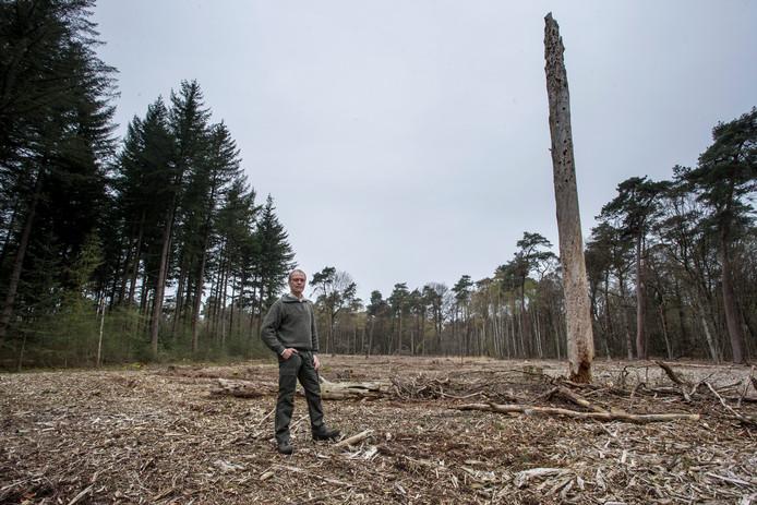 Staatsbosbeheer kapte hele stukken bos terwijl twijfels bestaan over de ecologische wijsheid daarvan. Op de foto: Boswachter Dirk van den Brink.