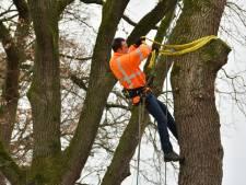 Eerste bomen Haaksbergerweg Goor doorstaan trekproef