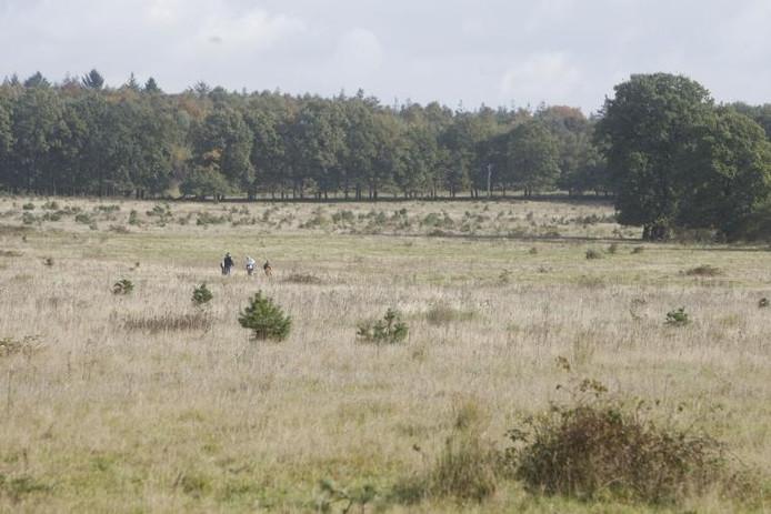 Een paar wandelaars in het open veld aan de rand van het Nationaal Park Utrechtse Heuvelrug bij Elst.